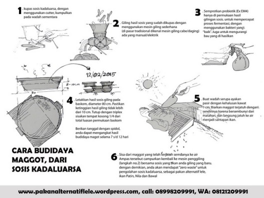 tutorial budidaya maggot Res